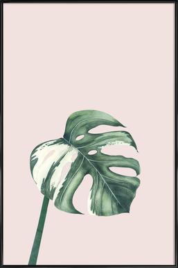 Tropical No. 11