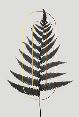 Plants O Aluminium Print