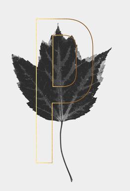 Plants P Aluminium Print