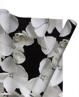 White Beauty On Black