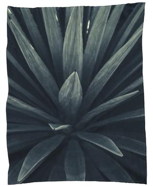 Palms-2397