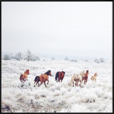 Winter Horses Framed Poster
