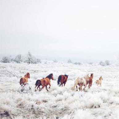 Winter Horses -Acrylglasbild