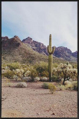 Arizona Cactus -Bild mit Kunststoffrahmen