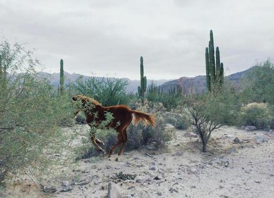 Mexican Horse Ride