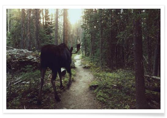 Trail Walking Moose Poster