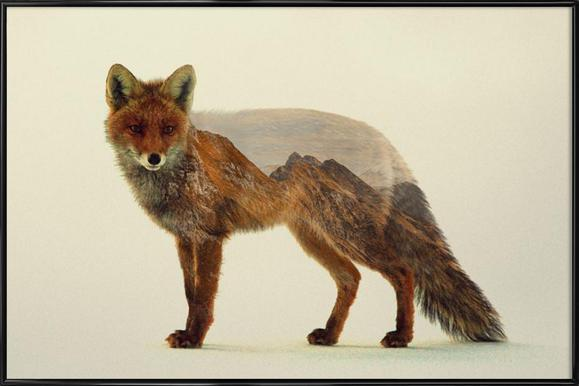 Mountain Fox -Bild mit Kunststoffrahmen