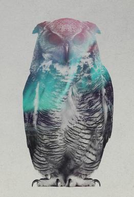 Owl Impression sur alu-Dibond