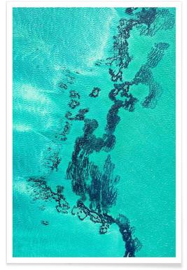 Shark Bay 13 - Premium poster