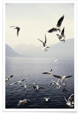Seagulls - Premium Poster