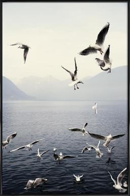 Seagulls - Poster im Kunststoffrahmen