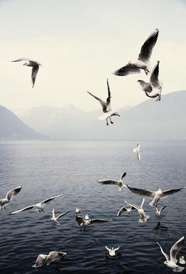 Seagulls acrylglas print