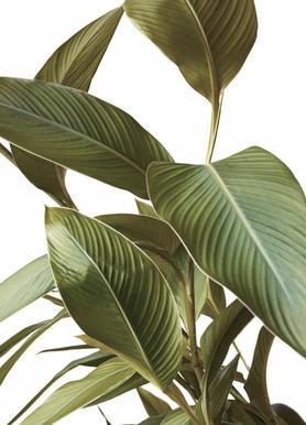 Leaves toile