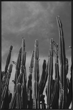 Cactus 02 - Affiche sous cadre standard