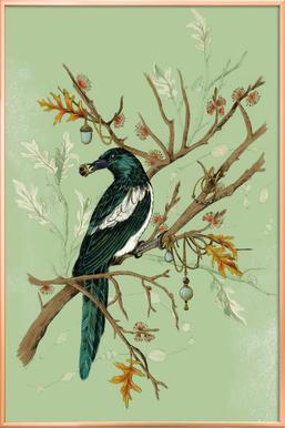 Magpie Jewels -Poster im Alurahmen