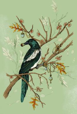 Magpie Jewels -Alubild