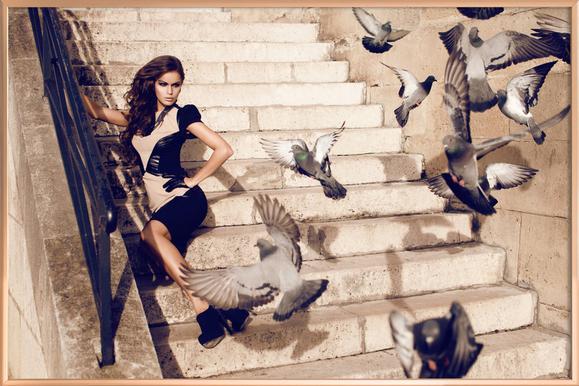 Doves in Paris Poster in Aluminium Frame