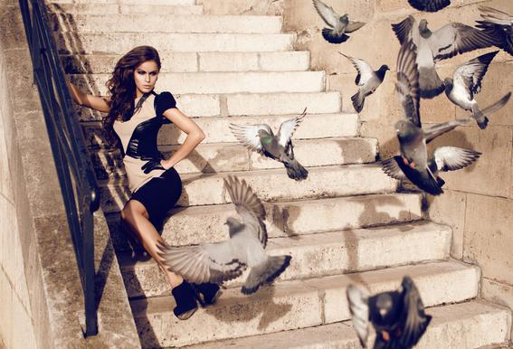 Doves in Paris Aluminium Print