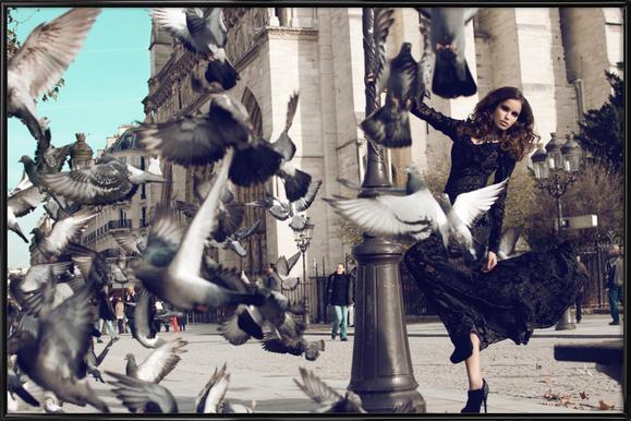 Doves in Paris II Framed Poster
