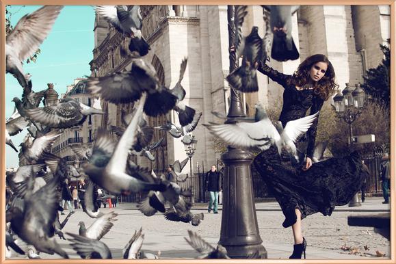 Doves in Paris II Poster in Aluminium Frame