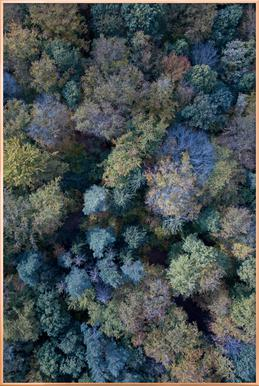Autumn Forests from Above