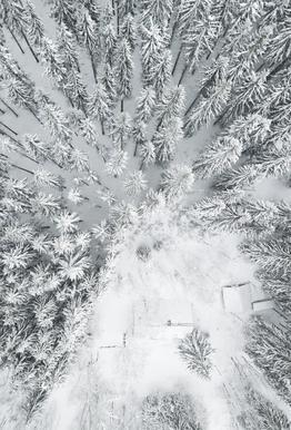 Calm Winter Aluminium Print
