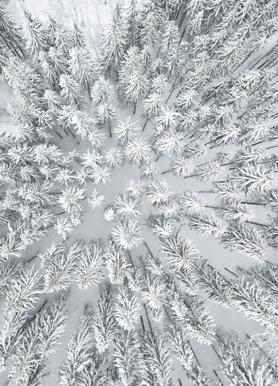 Snowy Forests canvas doek