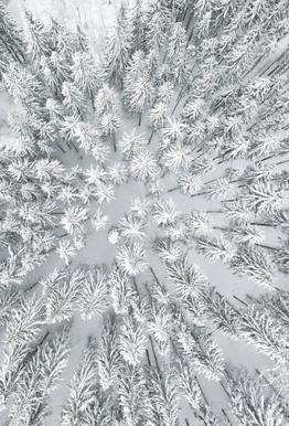Snowy Forests Aluminium Print