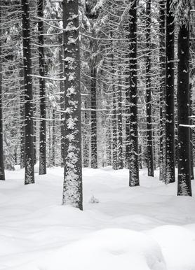 Deep Dark White Forest Canvas Print