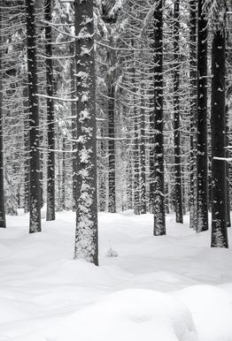 Deep Dark White Forest Aluminium Print