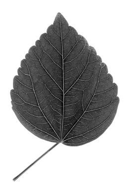 Look Closer Hibiscus Black - Aluminium print