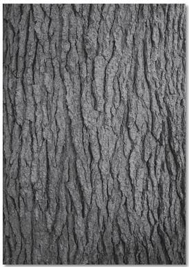 Hug a Tree Notebook