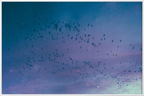 The Crows - Poster im Kunststoffrahmen