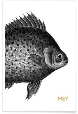 Hey Fish Poster