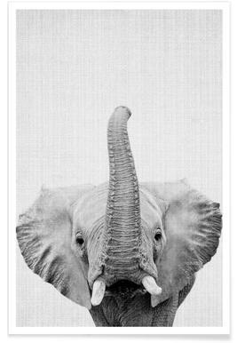 Eléphant - Photo en noir et blanc affiche