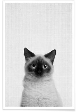 Katze-Schwarz-Weiß-Fotografie -Poster