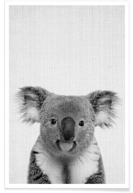Photo monochrome de Koala affiche
