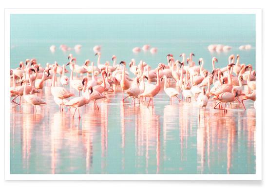 Flamingoes Colour Photograph Poster