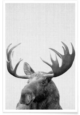 Elch-Schwarz-Weiß-Fotografie -Poster