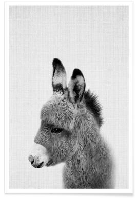 Donkey Black & White Photograph Poster