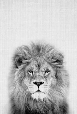 Lion alu dibond