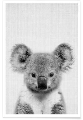 Koala Black & White Photograph Poster