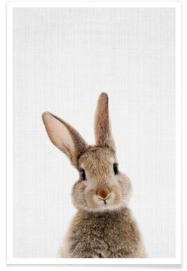 Baby Rabbit Colour Photograph Poster