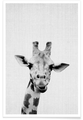 Girafe - Photo en noir et blanc affiche