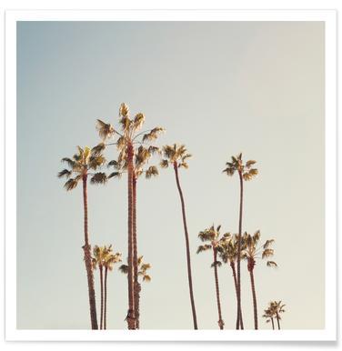 Foto van palmbomen poster