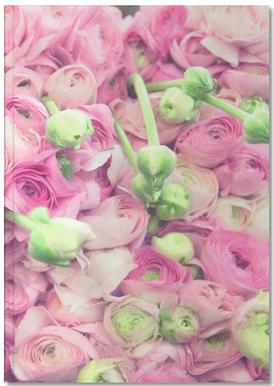 Ranunculus Light