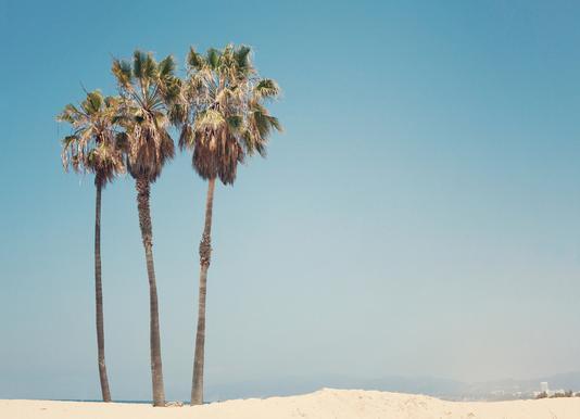 Venice Beach Palms