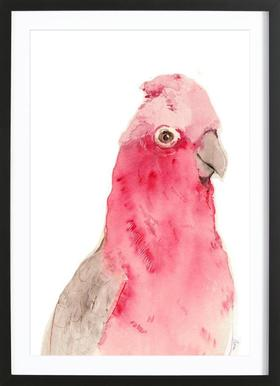 Pink Parrot affiche sous cadre en bois