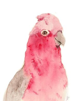 Pink Parrot toile