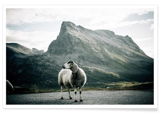 Sheep 1 affiche